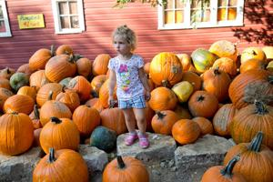 Map: Where to find local haunted houses, pumpkin patches, more