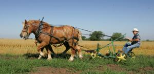 Briefly: 37th Camp Creek show focuses on threshing
