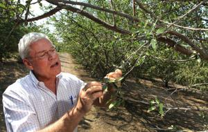 Almond joy: Worldwide cravings keep the nut California's No. 1 cash crop