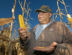 Prairies vanish in the US push for green energy