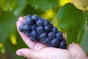 Big jump in number of Iowa vineyards