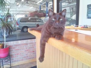 Lifelight: Bob, the cat, rules the roost at Omaha auto repair shop