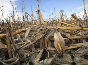 This year's drought conditions may arrive on a fast track