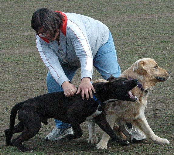 Dog Gone Problems: How to deal with dog possession ...
