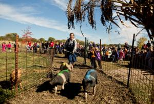 Pumpkins, pigs and plenty more