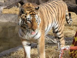 Mizzou alumni aim to attract veterinary students to Henry Doorly Zoo