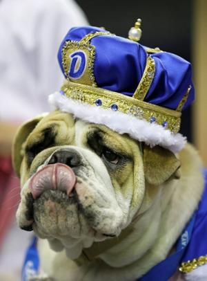Lucey is tops in Iowa's 'Beautiful Bulldog' event