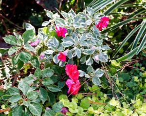 Show patience with your impatiens: It's too chilly to plant