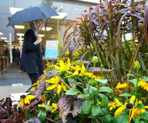 Rainy autumn helps region recover, fight off drought
