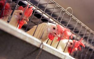 Farm bill amendment stirs debate