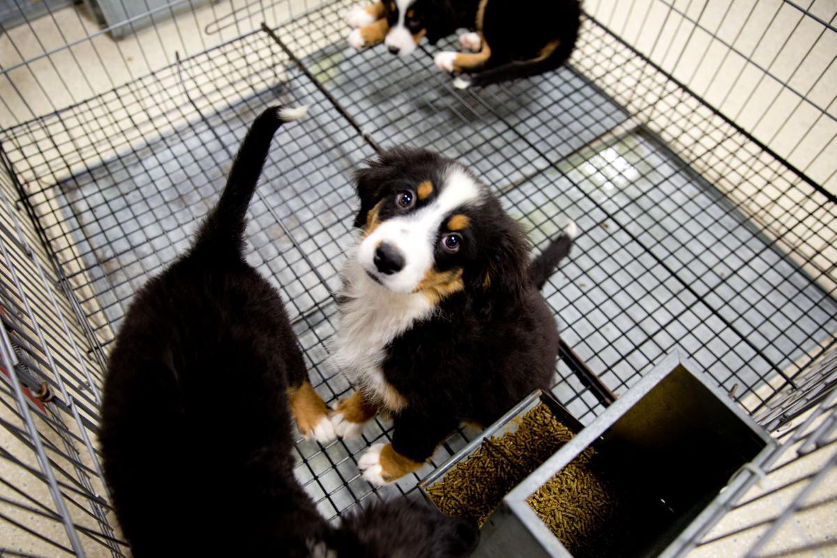 Dog Kennels Omaha