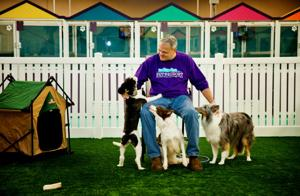 New high-end resort offers 'pet care with panache'