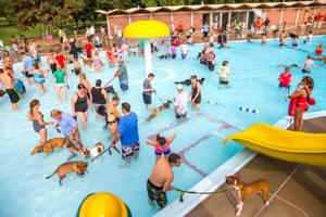 Video photos dogs hit the pool as swimming season ends omaha metro Gallagher swimming pool omaha ne