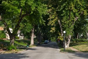 Trees planted, nurtured after crushing October '97 storm now flourishing