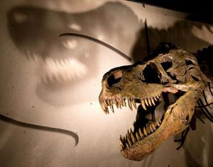 At 3,922 pounds, Sue's skeleton worth seeing