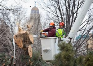 About 60 trees coming out to prepare for next phase of Lincoln Centennial Mall project