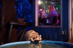 Omaha's dive-iest dive bars