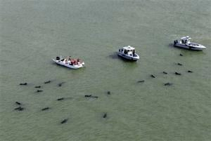 Workers try again to save whales in Everglades