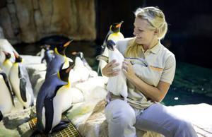 Kelly: K.C. Zoo's new exhibit gets penguin donation from Omaha's Henry Doorly Zoo