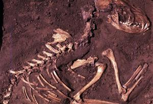 Where did dogs first appear? DNA points to Europe