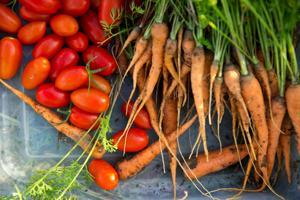 Get gardening: Soil may be ready for cool season veggies