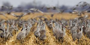 Reflective power line tags reduce crane deaths