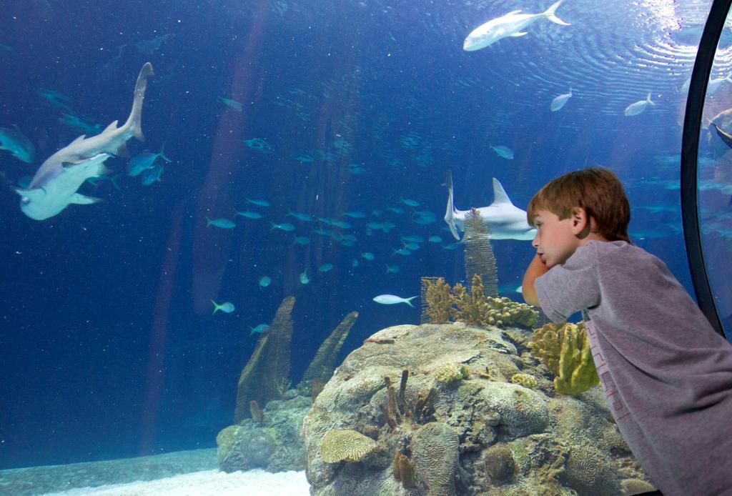 Henry Doorly Zoo Aquarium To Offer Free Admission Sunday