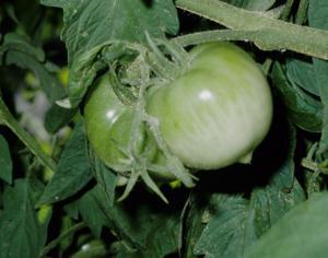 Jan Riggenbach: How to enjoy vegetables months after the harvest