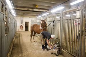 Iowan, The International competition's farrier, knows horses, hooves inside and out