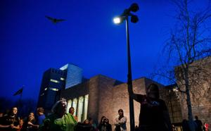 250 bats on hunt for new hangouts after mass release in Omaha