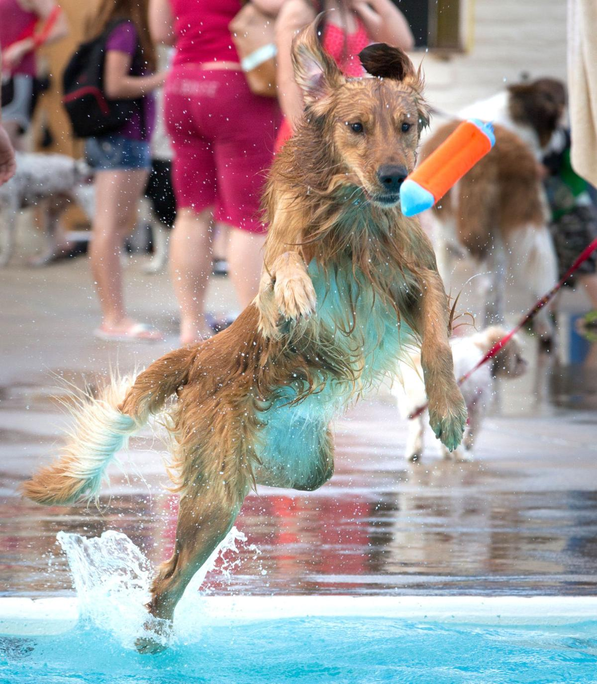 Pooches Get A Chance To Paddle In Omaha Pools With Proceeds Going To Nebraska Humane Society
