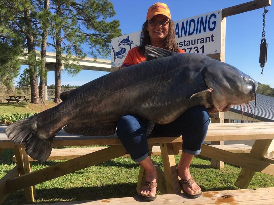 world record blue catfish