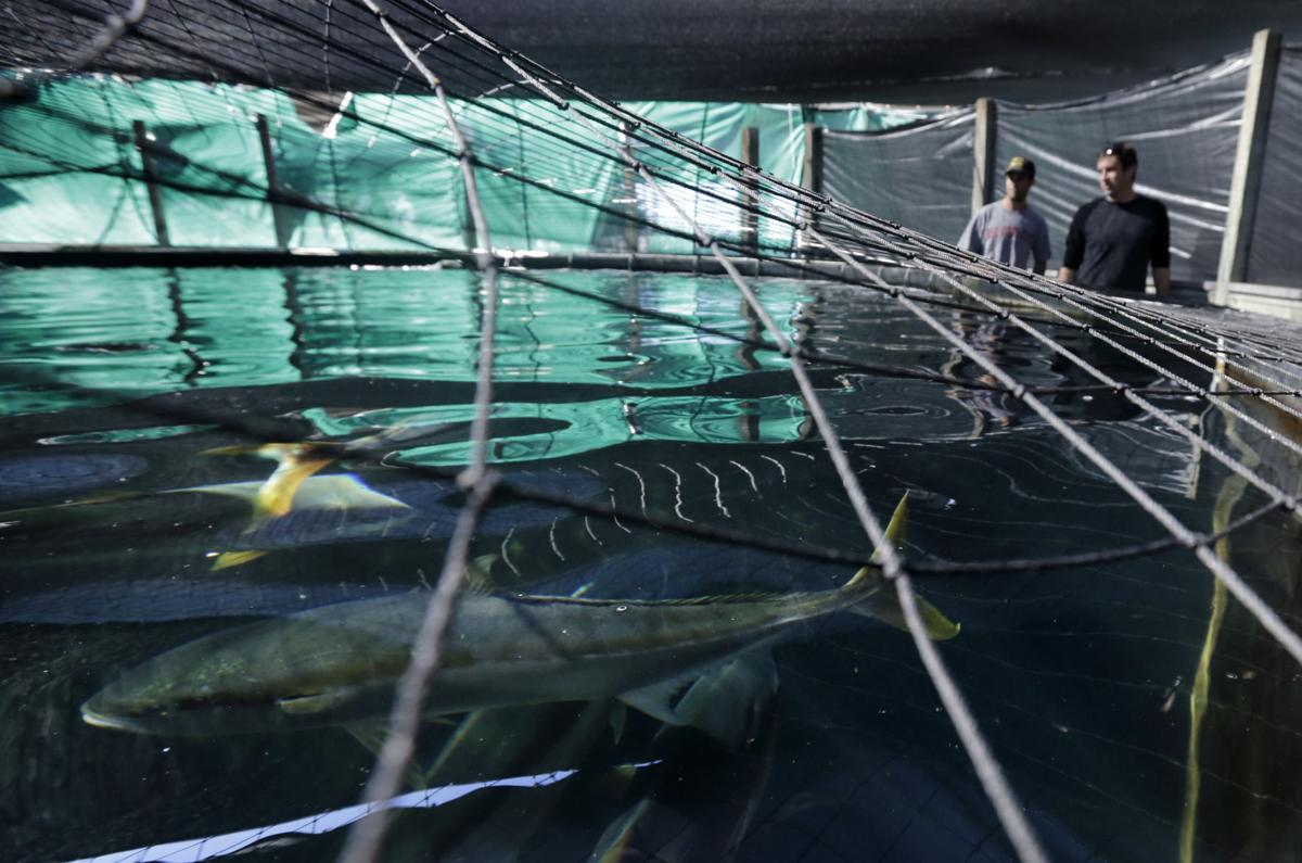 Aquaculture stalls after feds allow fish farming in open for Aquaculture fish tanks