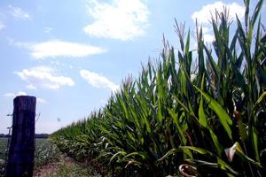 7/16/12 Drought, Dry corn