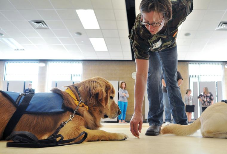 Therapy Dog Training Quad Cities