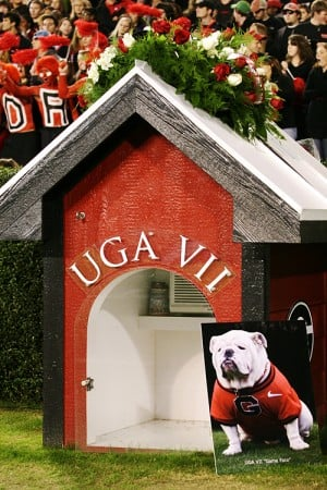 Uga top dog? No, but 12th is pretty good