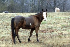Horse Herpes.jpg