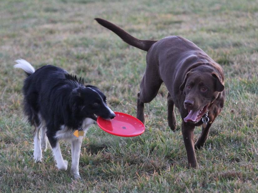Gone to the dogs: Maize Memorial Dog Park opens