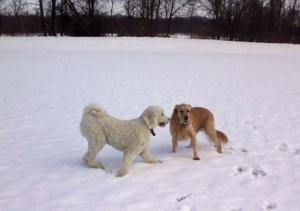 Charley and Tucker