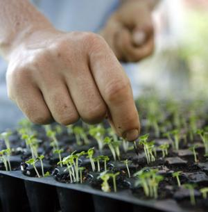 Plant heirloom seeds indoors to jump-start spring