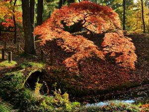 Maymont Japanese Garden Photo Contest Winner