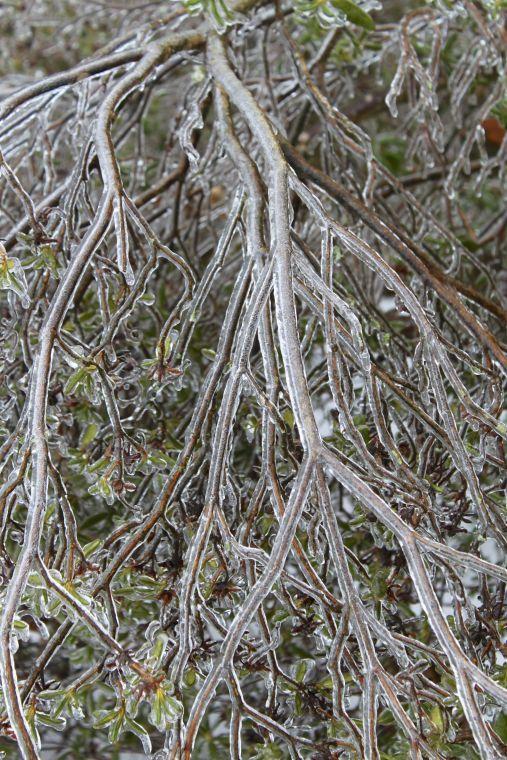 Icy limbs