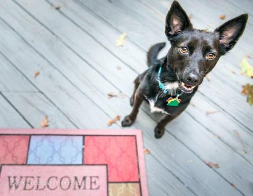 Pet-friendly party with free outdoor movie at Richmond Animal League this Sunday