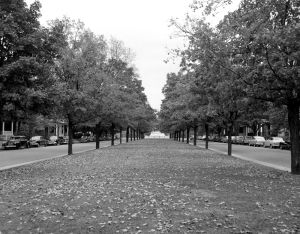 FALL'S FALLEN LEAVES PUT A LACY SPREAD ON MONUMENT AVENUE'S CENTER STRIP