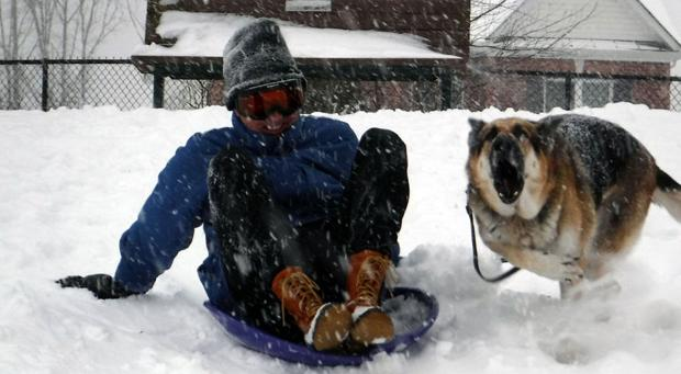 Sledding with German Shepherd