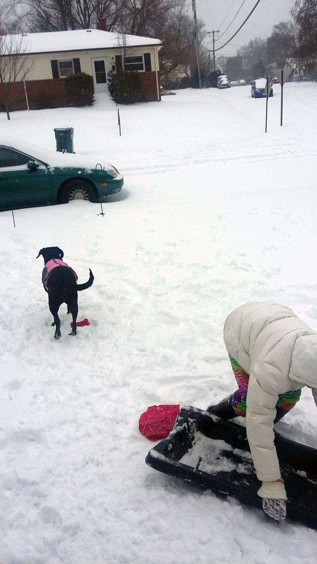 My daughter and lab were sled riding at our house in Lakeside. We have a little hill.