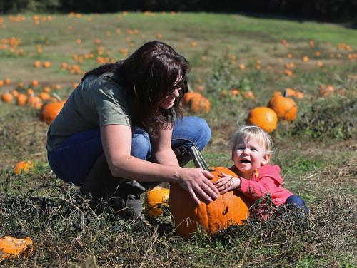 Pumpkin picking starts this weekend at Ashland Berry Farm & Chesterfield Berry Farm
