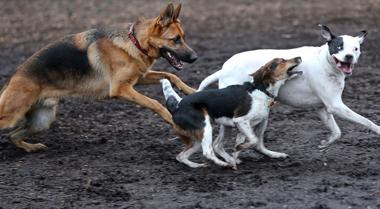 <p>Dogs play at Barker Field Dog Park near the Carillon in Byrd Park, Dec.29, 2014.</p>