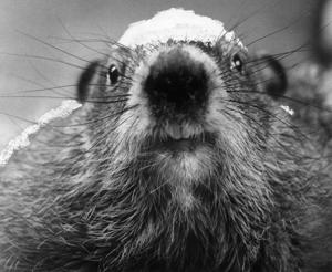Image result for february 2, 1937 groundhog day