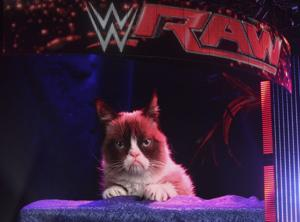 Grumpy Cat Hosts Wrestling Match